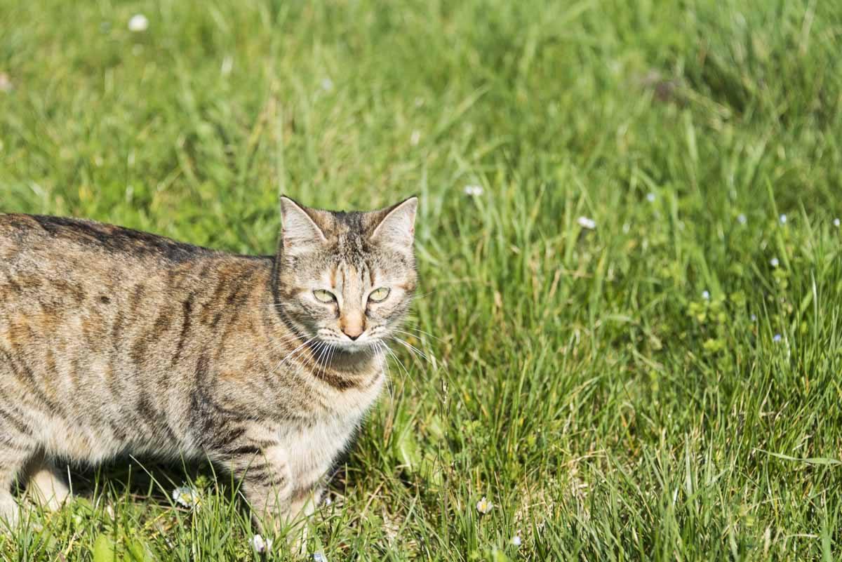 leah cat housesitting france