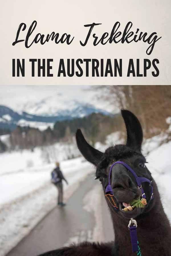 llama trekking austria pin