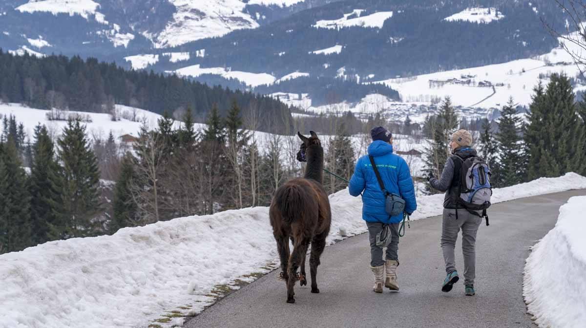 llama trekking in tyrol two hikers