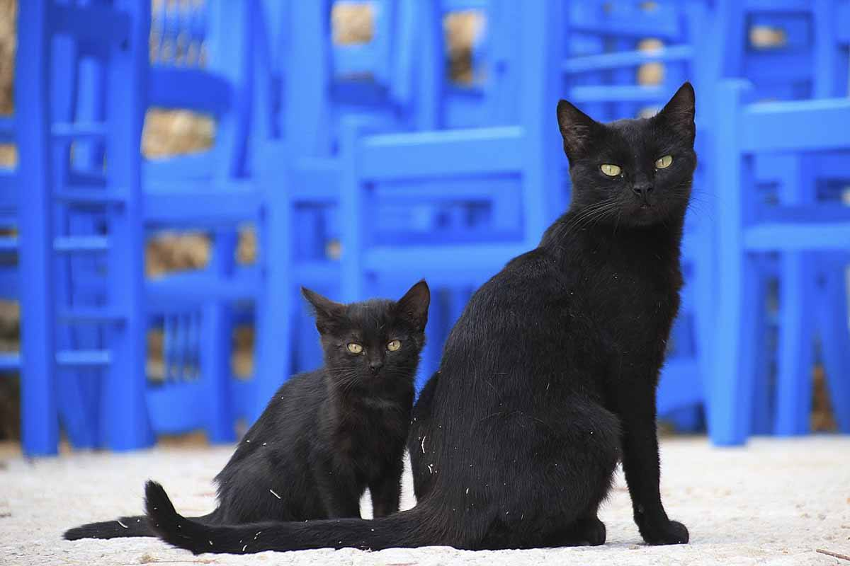 mykonos cute kittens