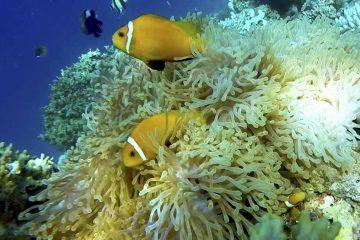 scuba diving in alor