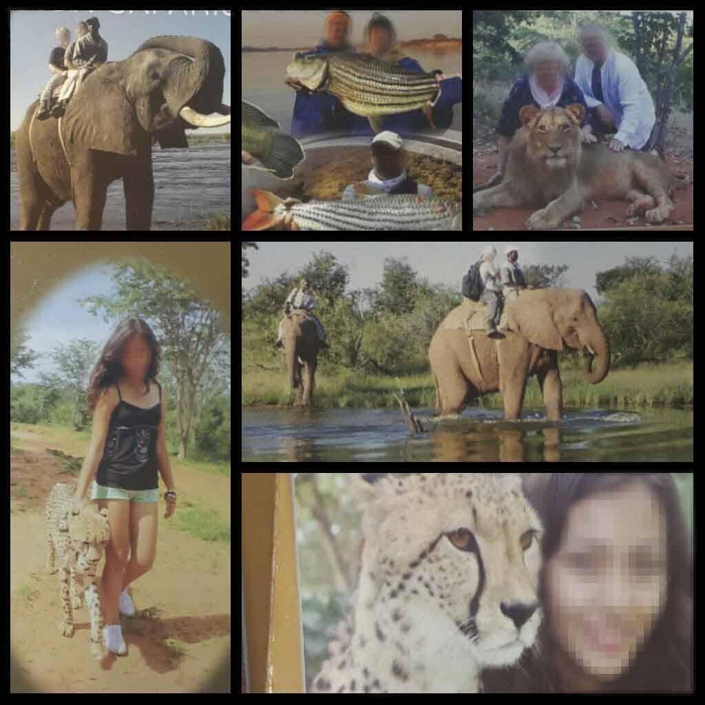 animal activities avoid south africa 1