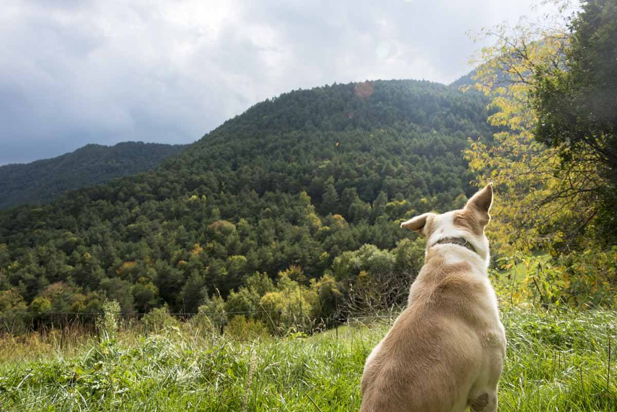 hiking dog vall del bac