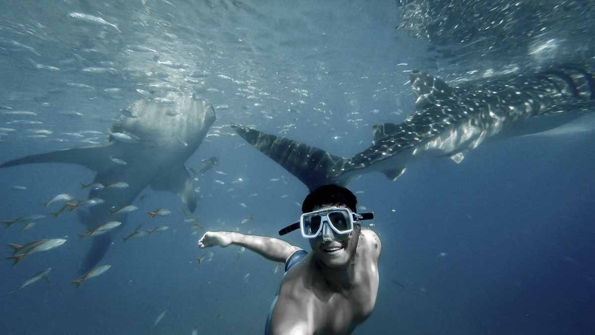 swimming whale shark mexico