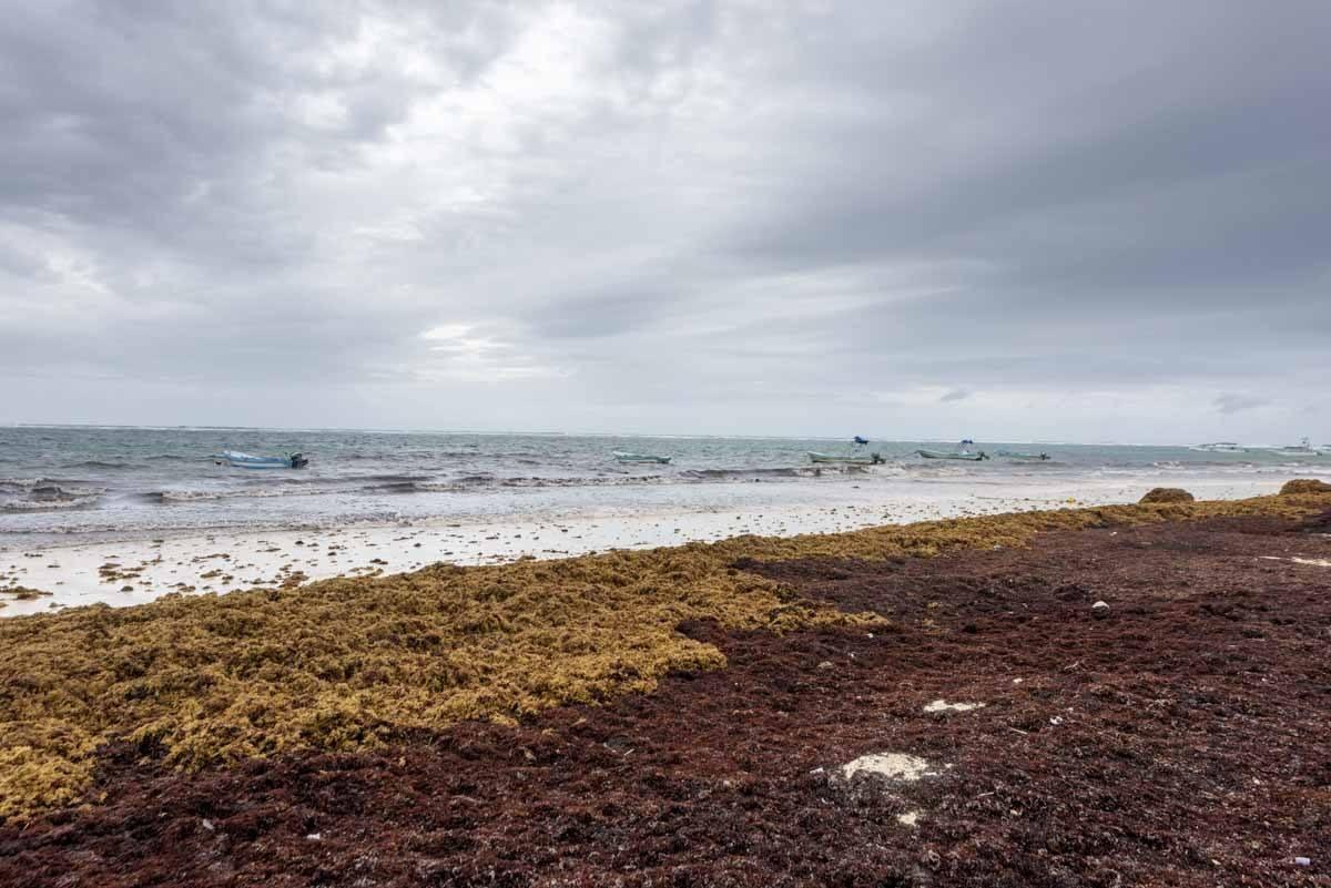 tulum sargasso beach rainy season