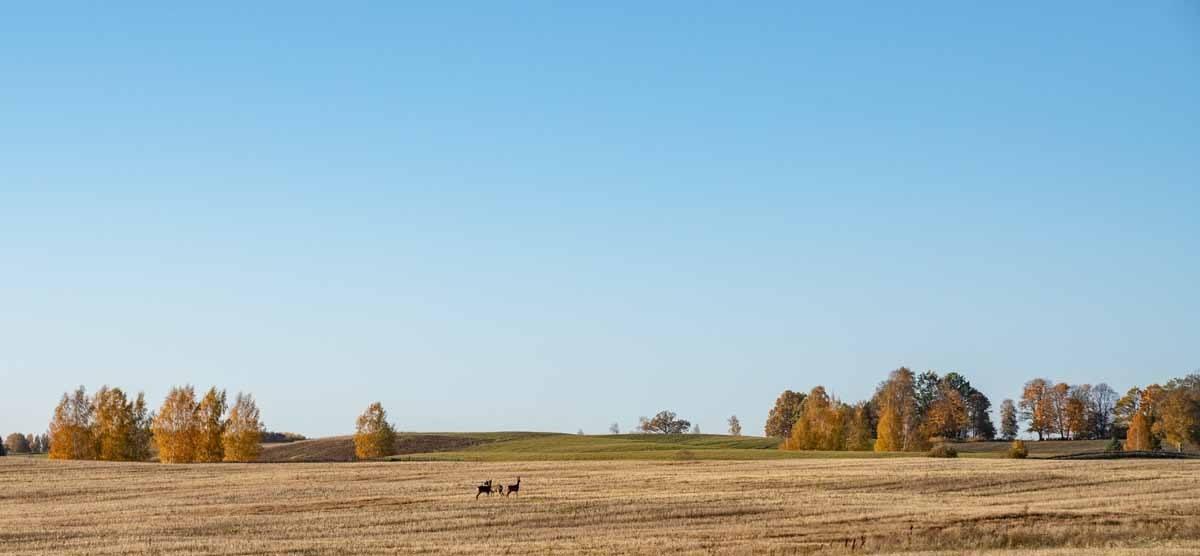 aluksne autumn fields
