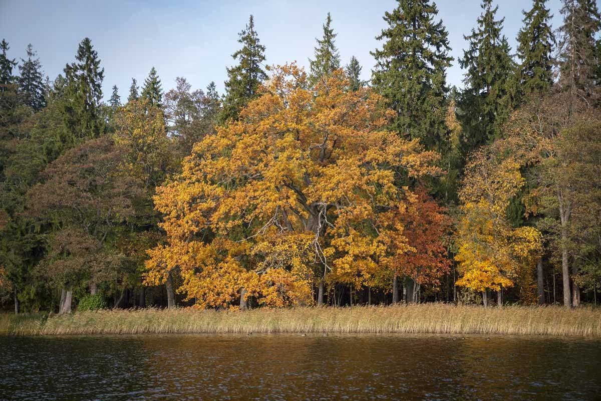 aluksne autumn lake latvia