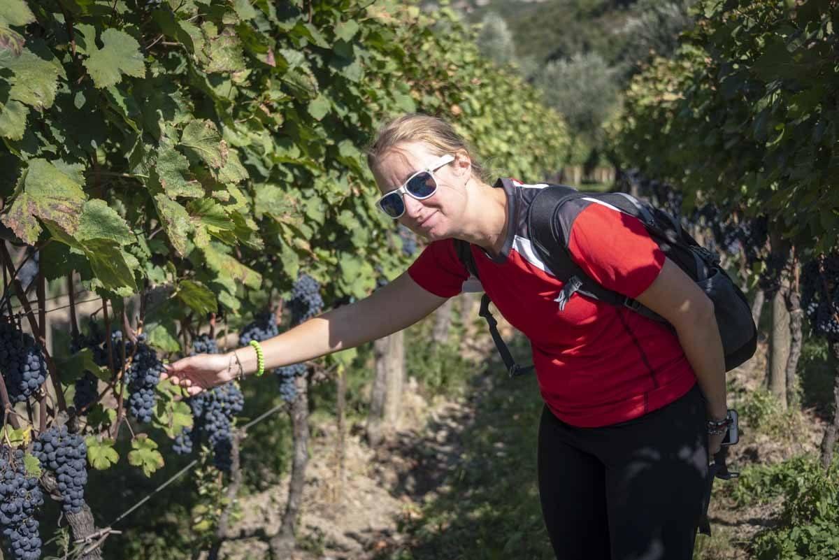 lake garda grapes harvest