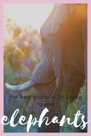 best place in sri lanka for elephants kaudulla