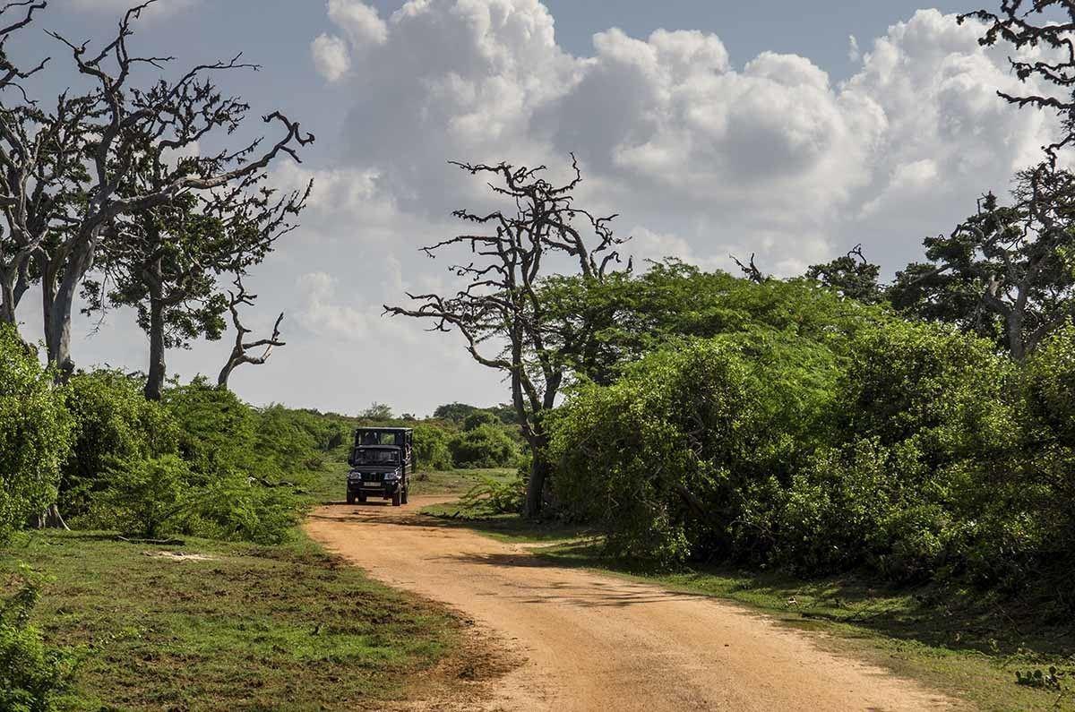 bundala national park sri lanka