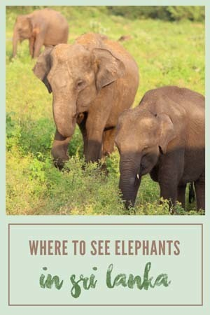where to see elephants in sri lanka