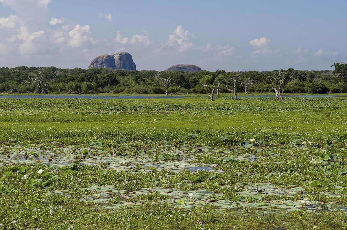 yala national park rocky outcrop
