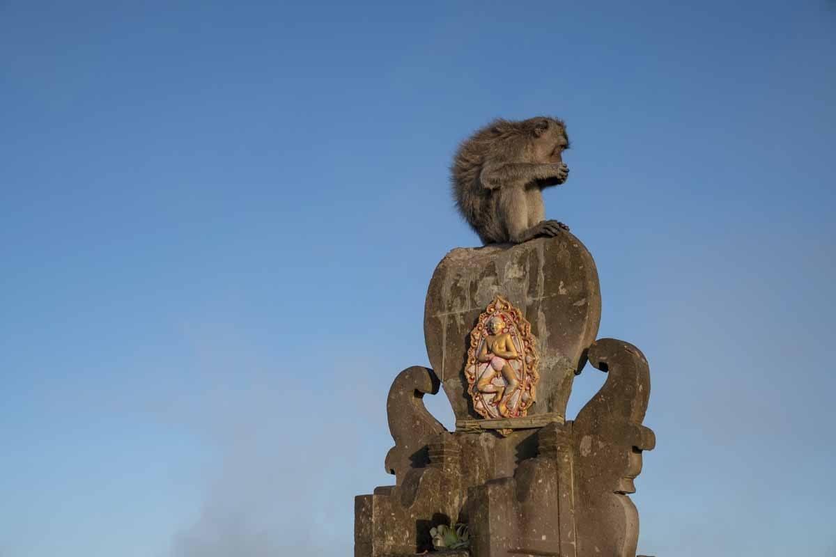 monkey batur summit