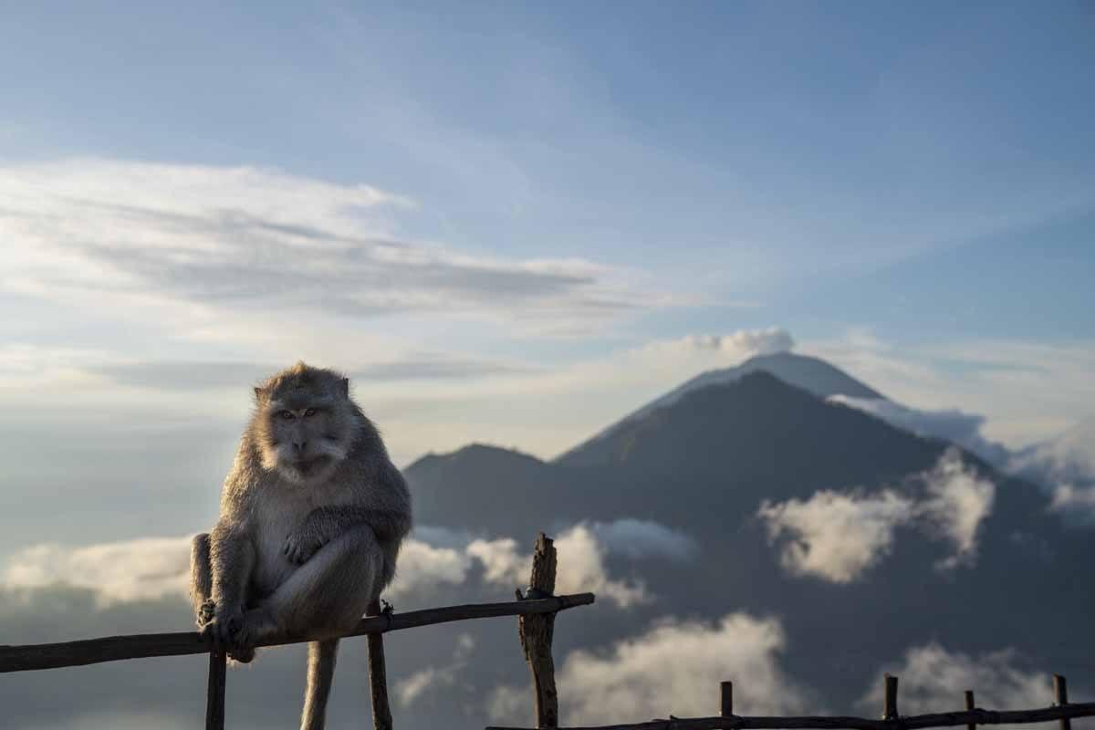 monkey mount agung