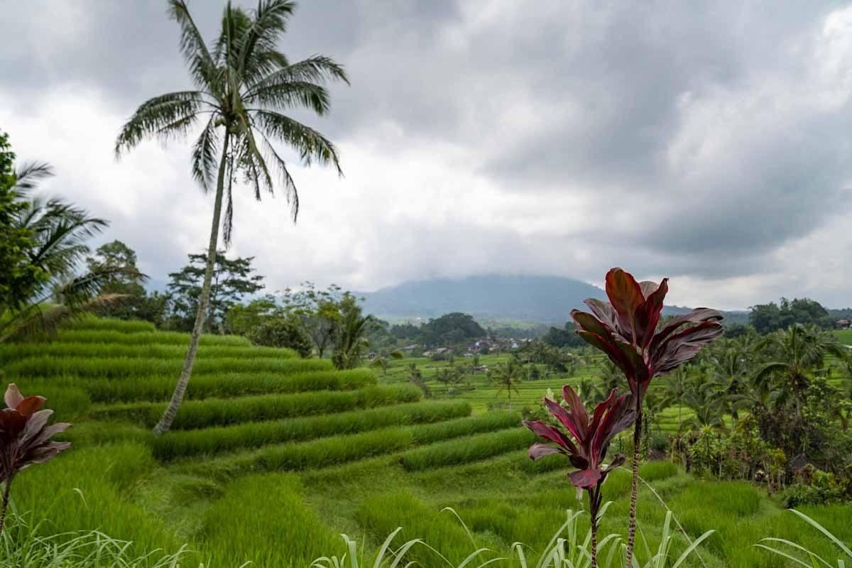ubud tegalalang terraces