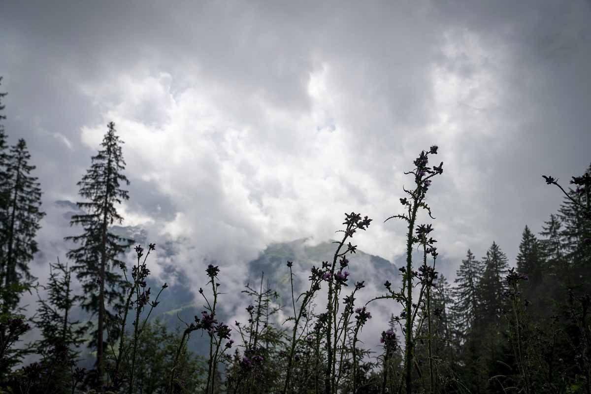 visit bregenzerwald fog flowers