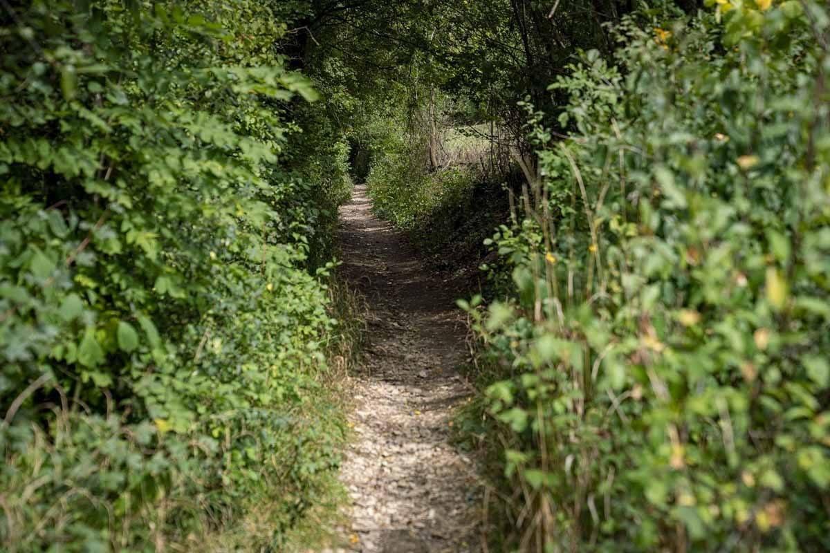 5 seidla steig path in woods