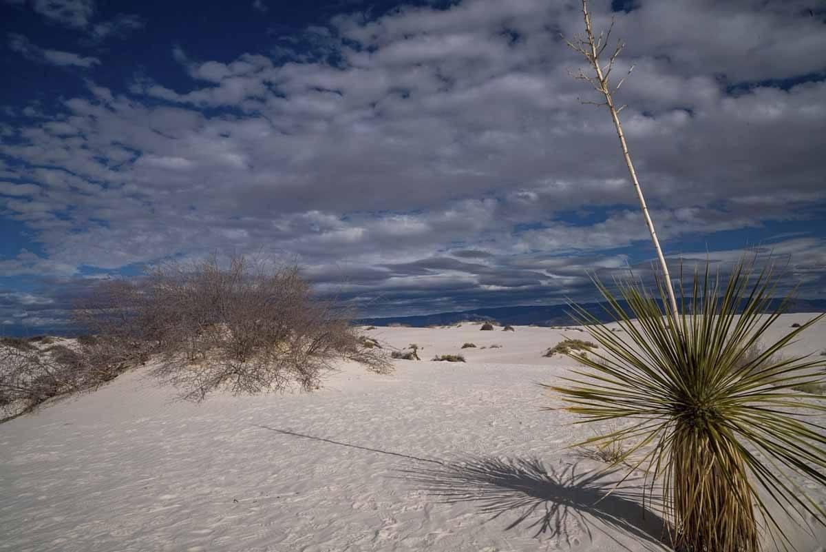dune life nature trail plants