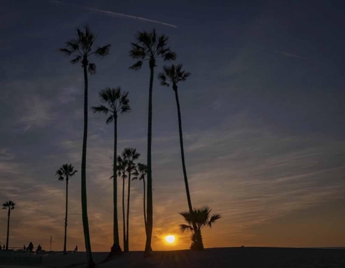 venice beach sunset palms