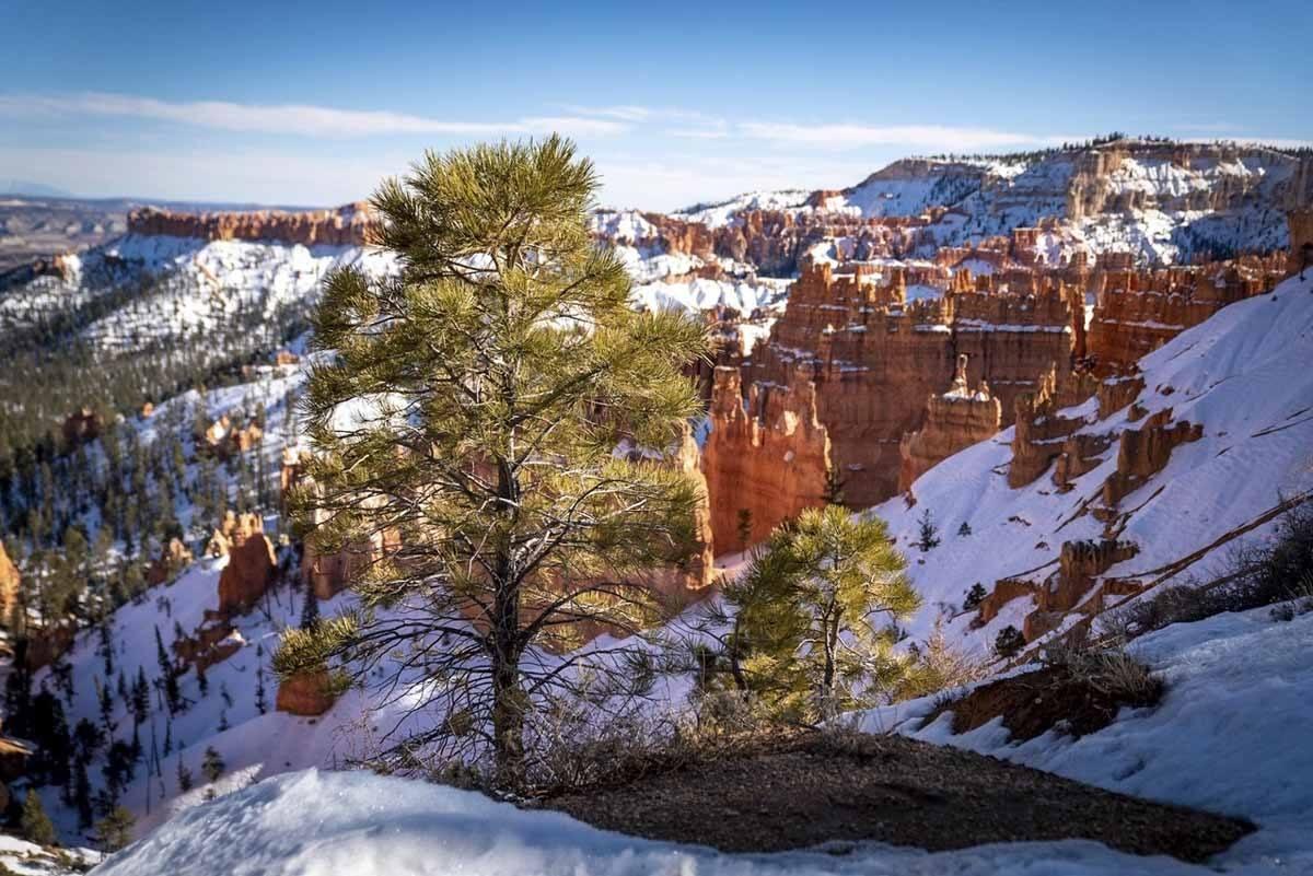 bryce canyon winter rim trail