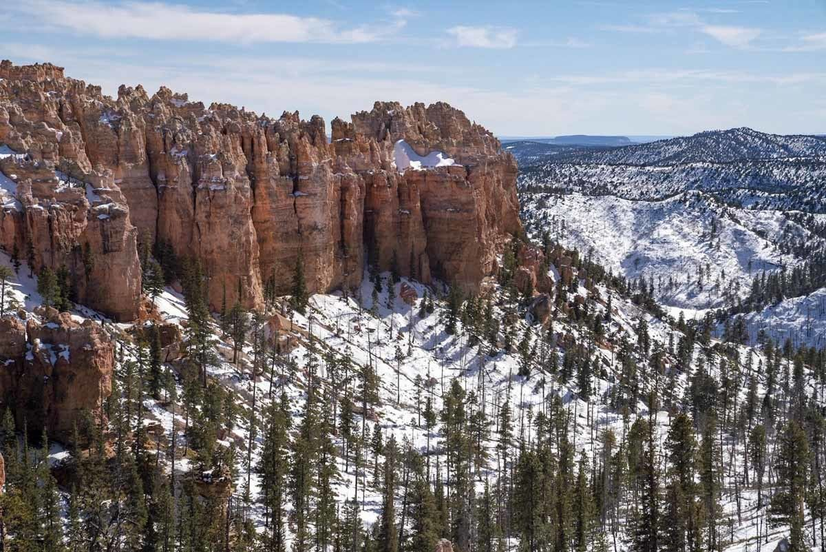 bryce canyon winter trees