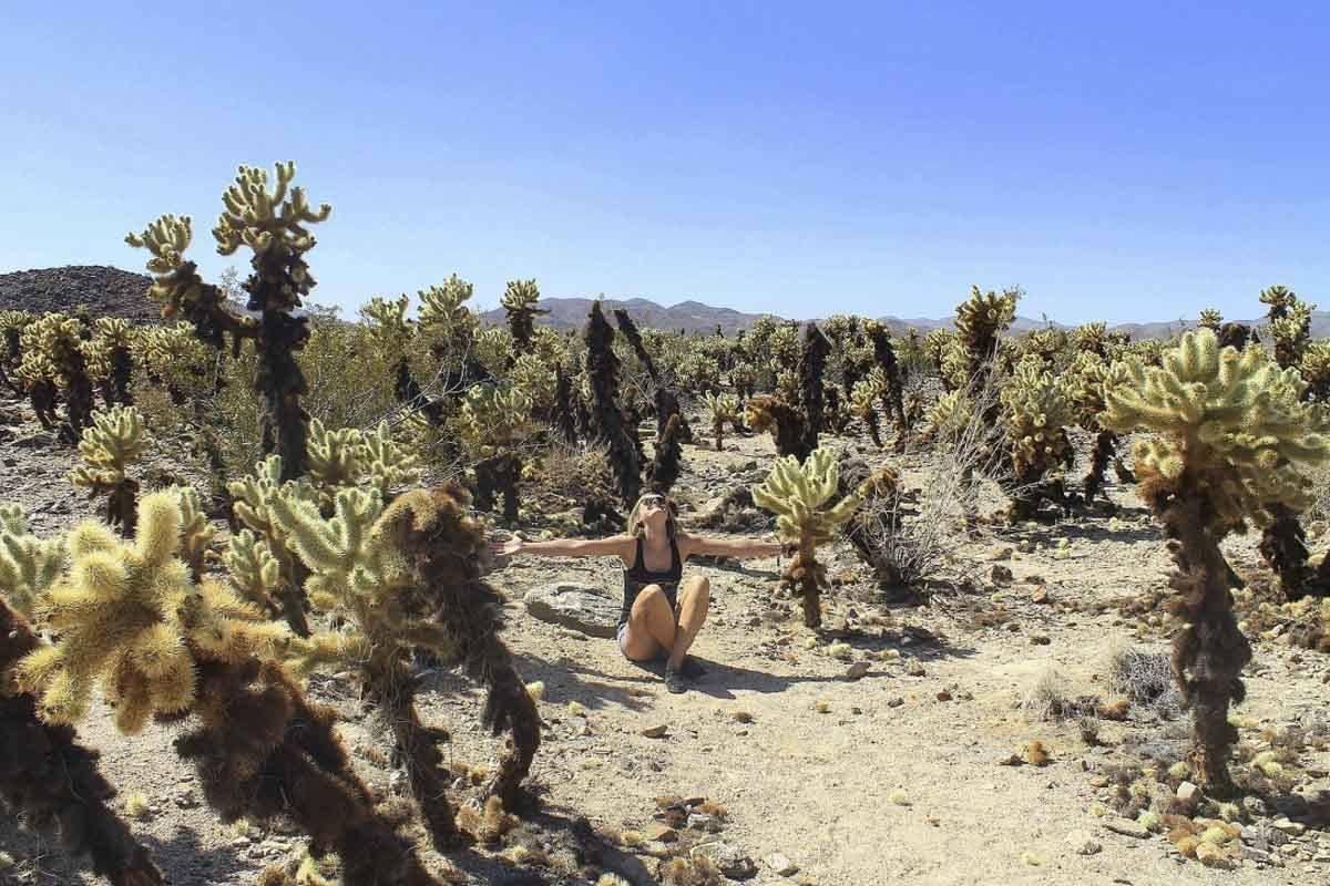 Cholla Cacti at Joshua Tree National Park
