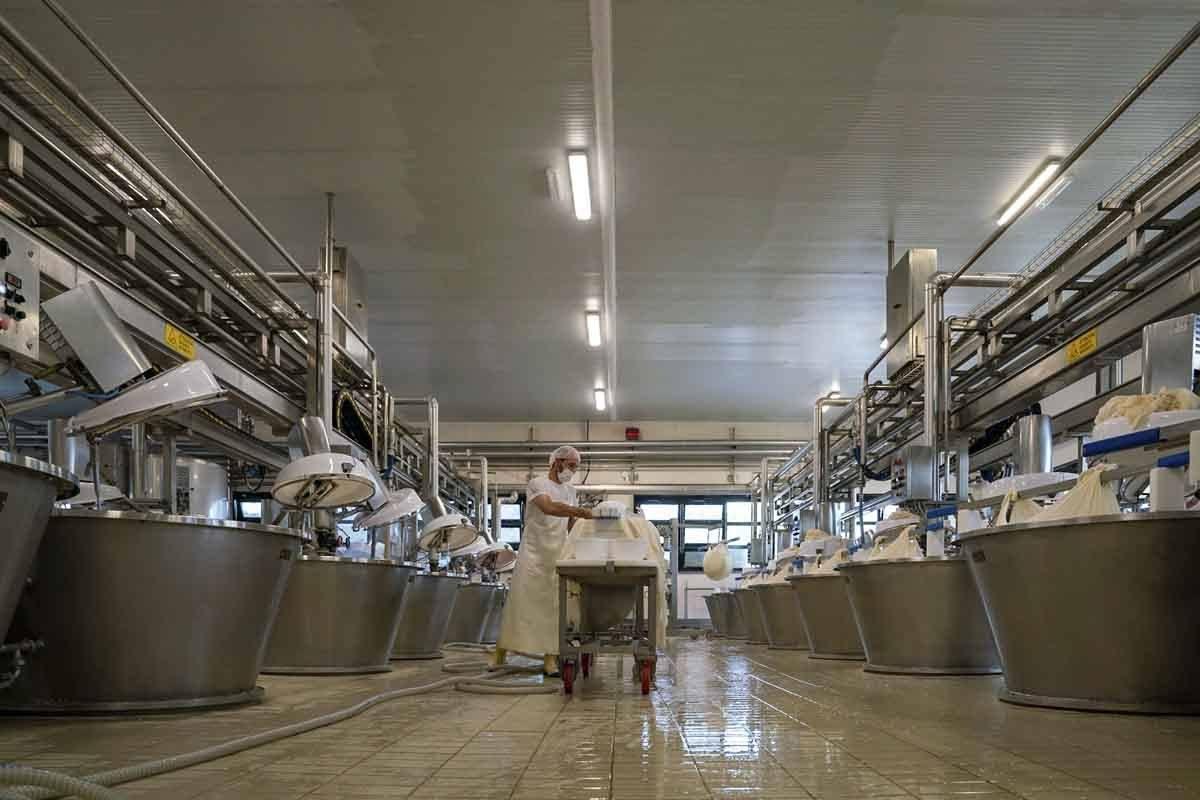 parmigiano factory fidenza