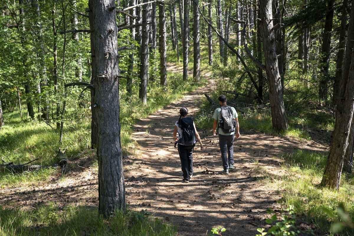via francigena forest hike